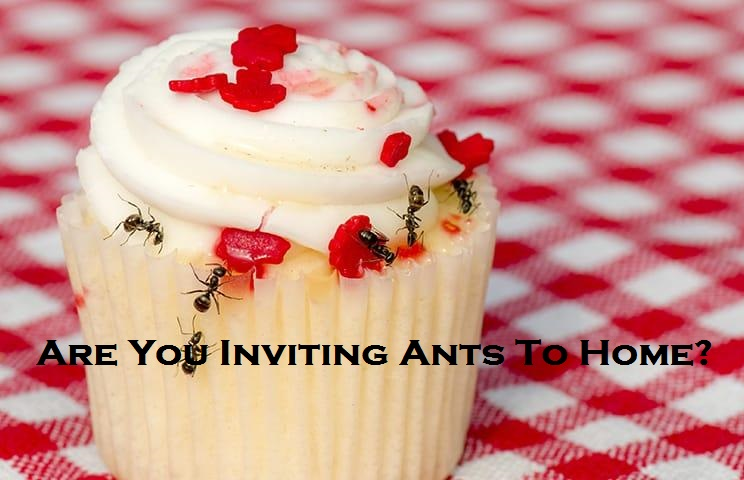 Are You Inviting Ants To Home?