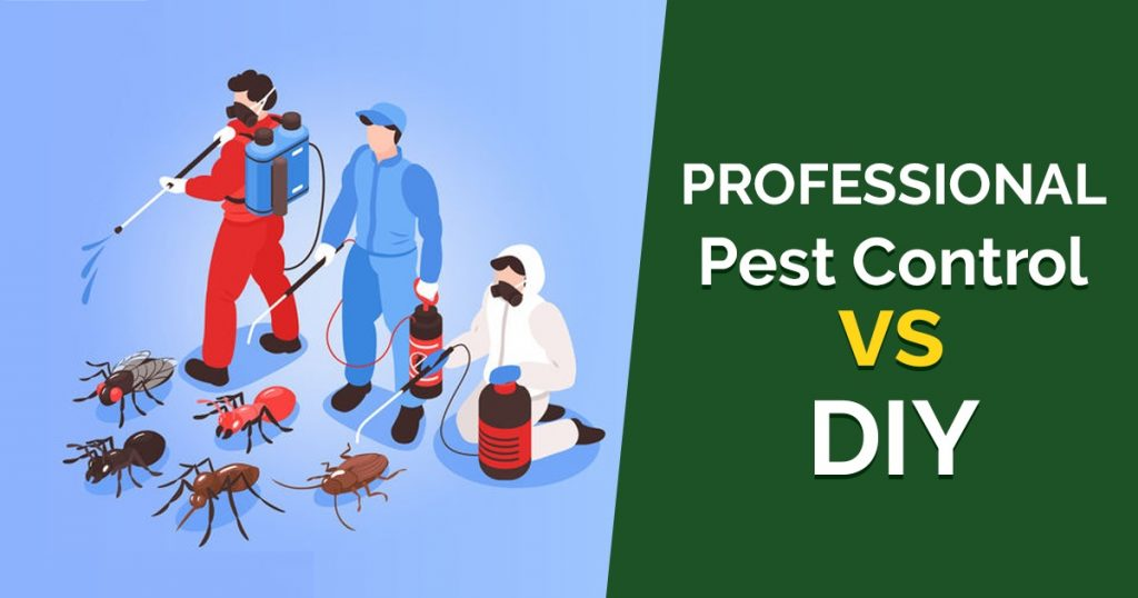 Professional VS DIY Pest Control – What Is Best For You?