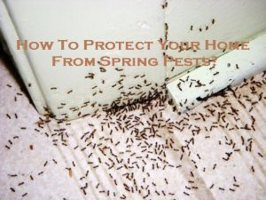 How To Protect Your Home From Spring Pests?