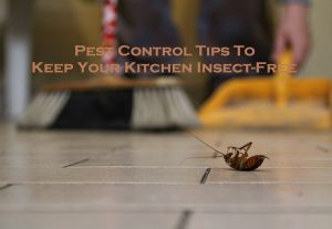 Pest Control Tips To Keep Your Kitchen Insect-Free
